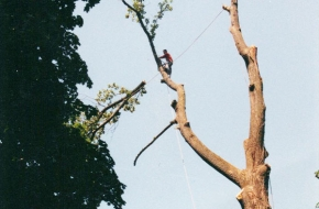 Atlas Tree Service, Inc.