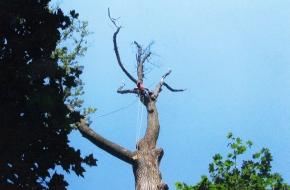 Atlas Tree Service, Inc.
