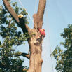 Atlas Tree Service, Inc