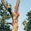 Atlas Tree Service, Inc